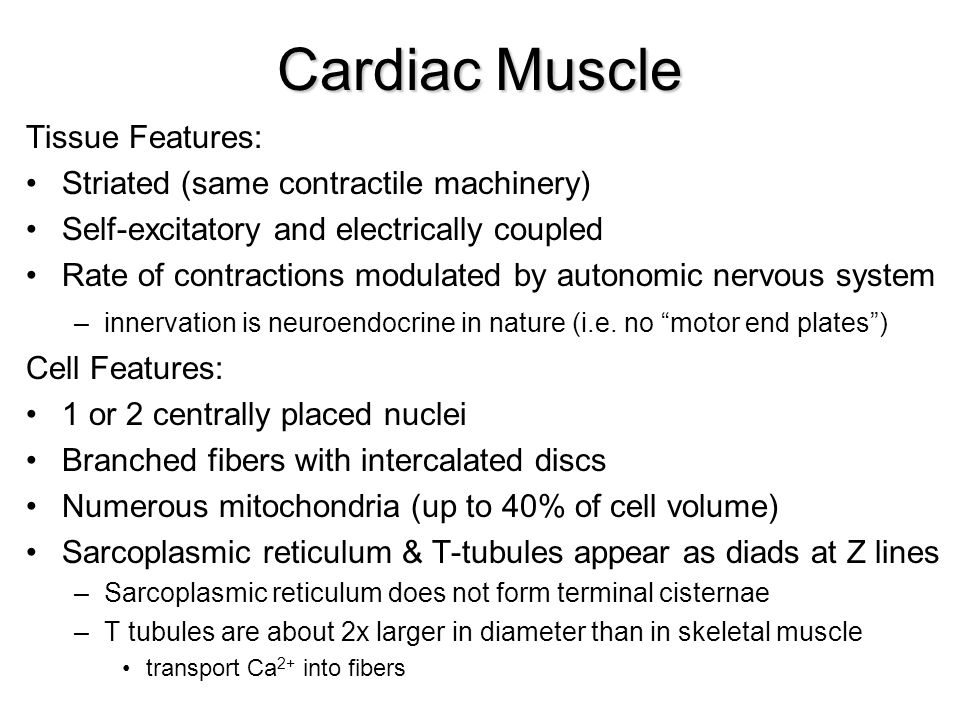Cardiac Muscle Tissue Features: Striated (same contractile machinery)