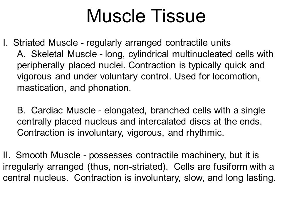 Muscle Tissue I. Striated Muscle - regularly arranged contractile units.