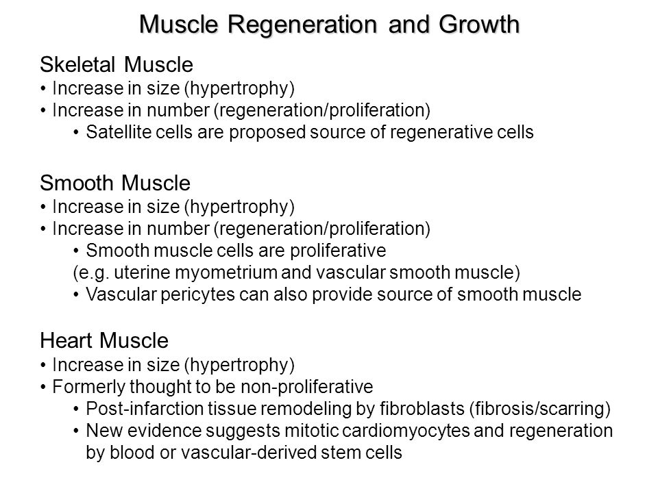 Muscle Regeneration and Growth