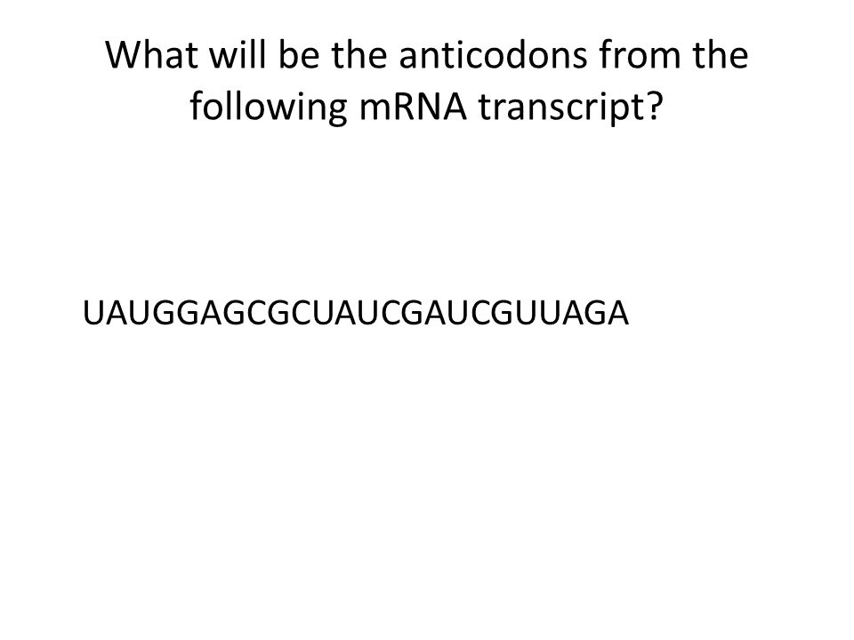 What will be the anticodons from the following mRNA transcript