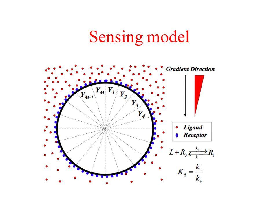Sensing model