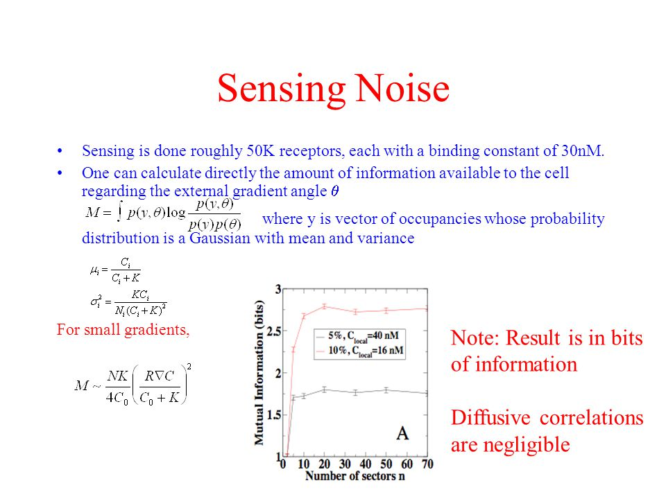 Sensing Noise Sensing is done roughly 50K receptors, each with a binding constant of 30nM.