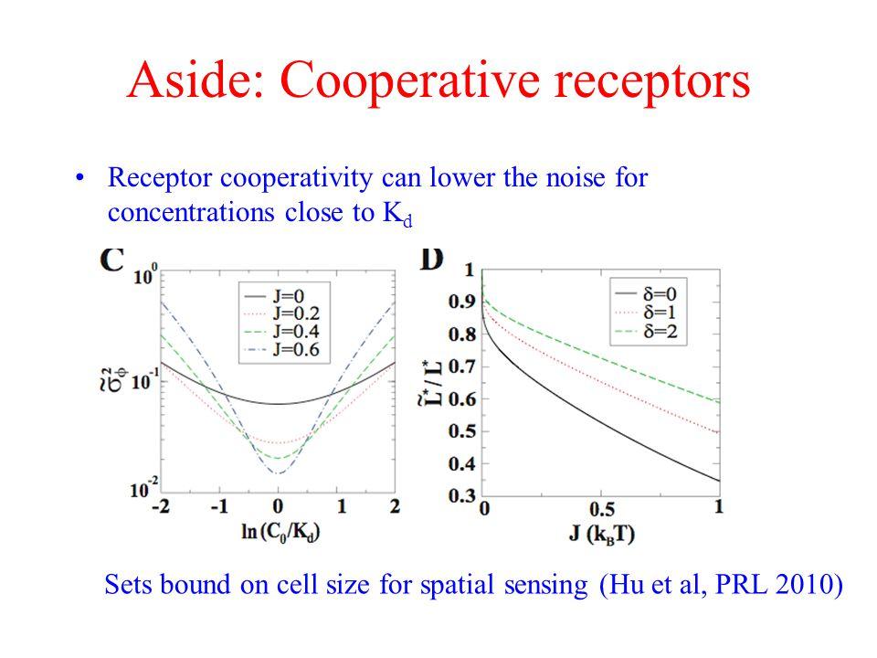 Aside: Cooperative receptors