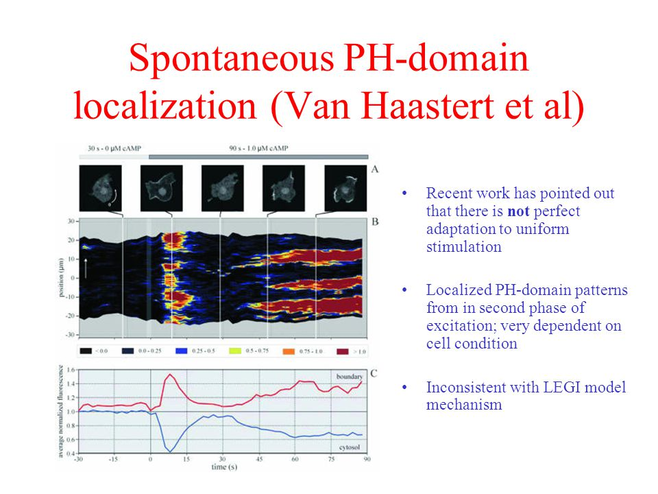 Spontaneous PH-domain localization (Van Haastert et al)