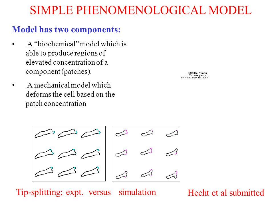 SIMPLE PHENOMENOLOGICAL MODEL