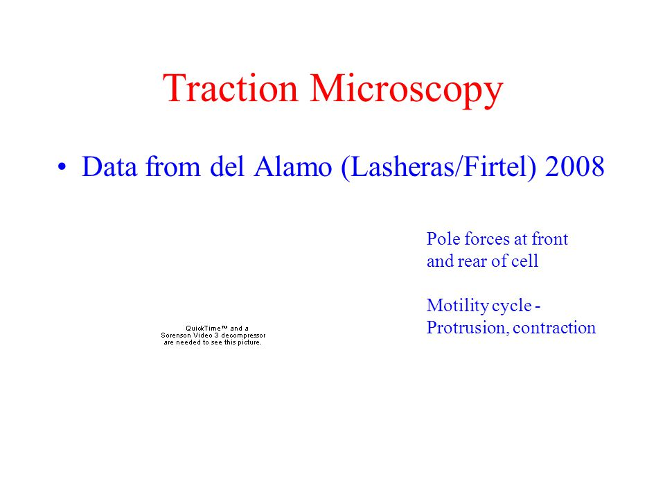 Traction Microscopy Data from del Alamo (Lasheras/Firtel) 2008
