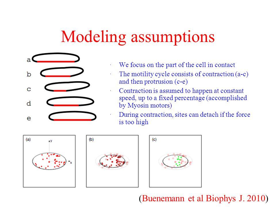 Modeling assumptions (Buenemann et al Biophys J. 2010)