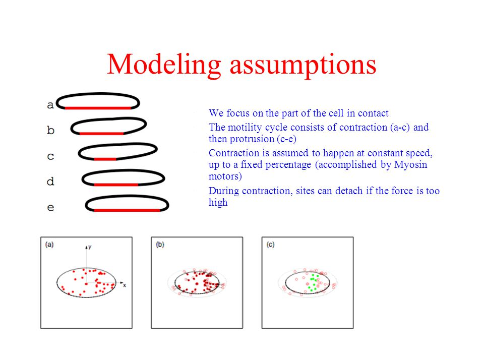 Modeling assumptions We focus on the part of the cell in contact
