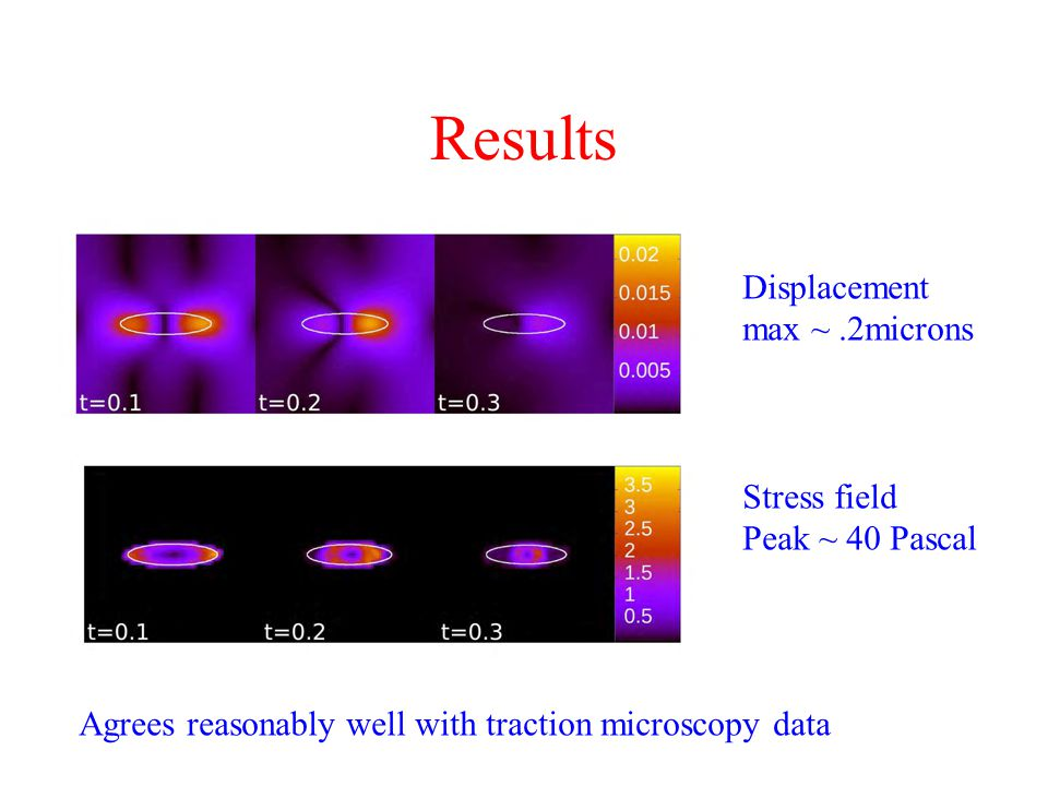 Results Displacement max ~ .2microns Stress field Peak ~ 40 Pascal