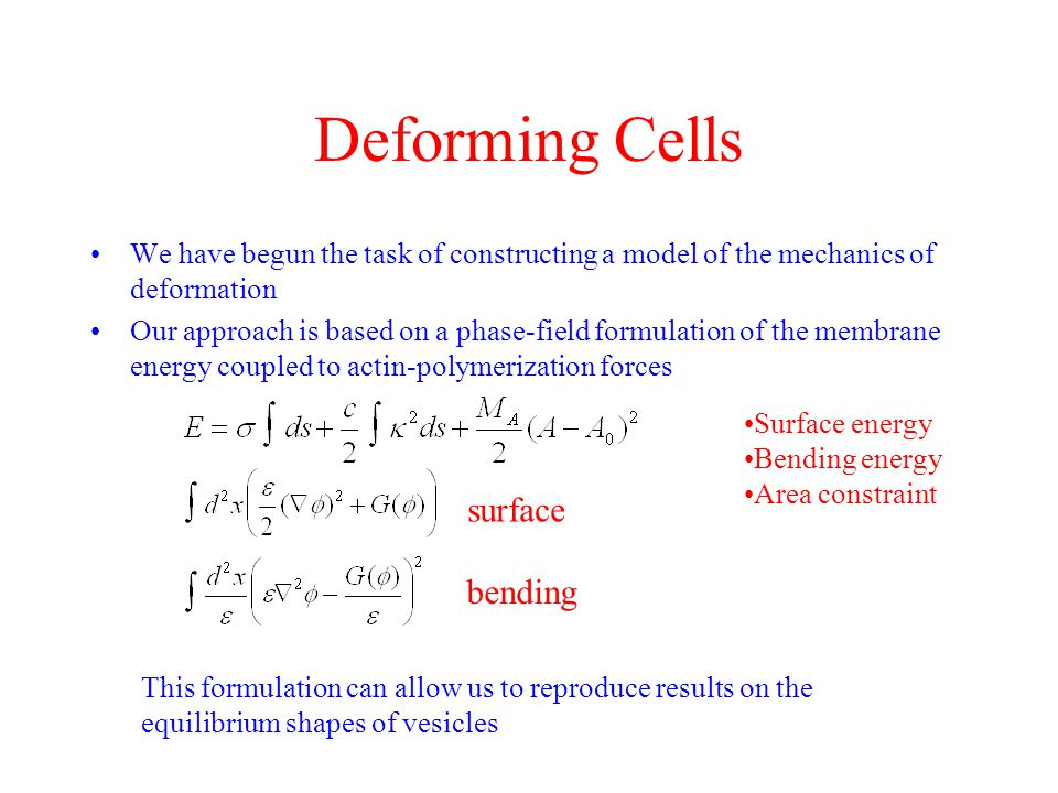 Deforming Cells surface bending