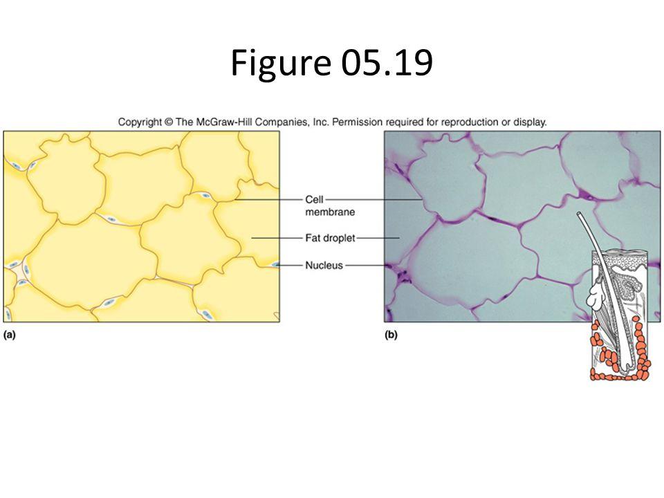 Figure 05.19
