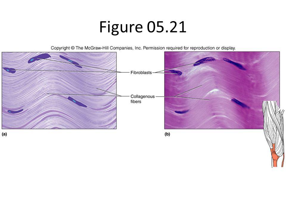 Figure 05.21