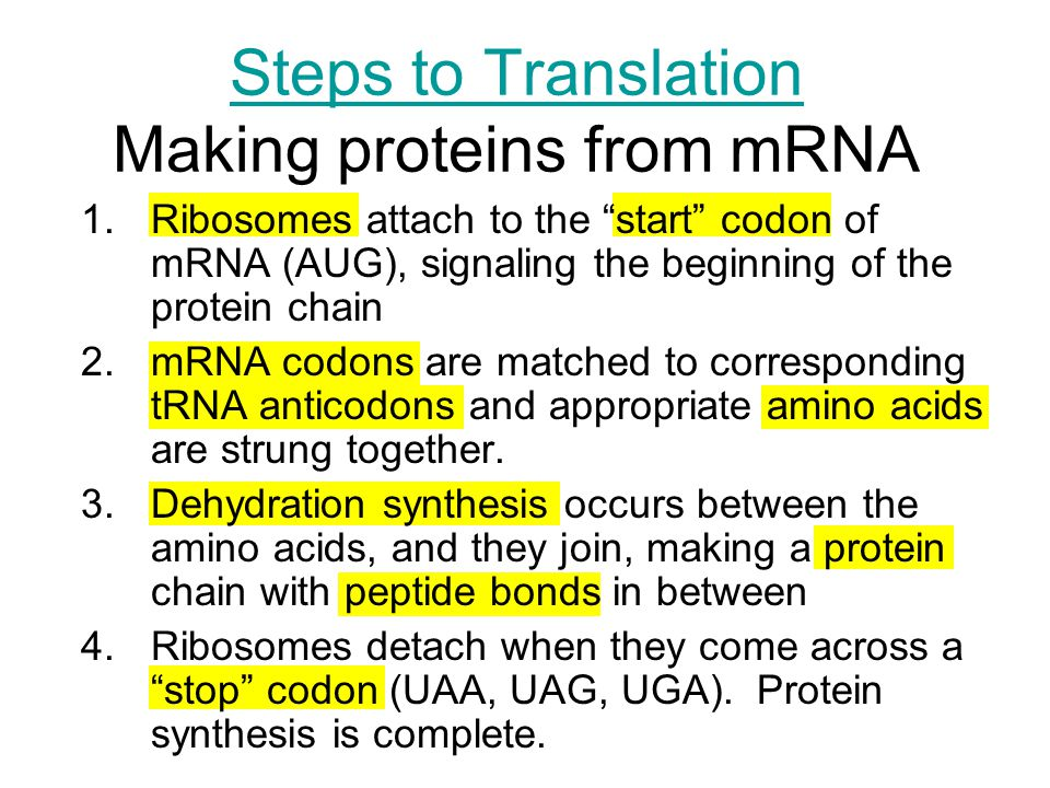 Steps to Translation Making proteins from mRNA