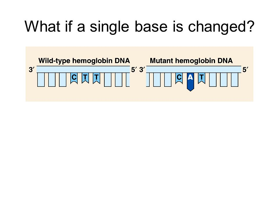 What if a single base is changed