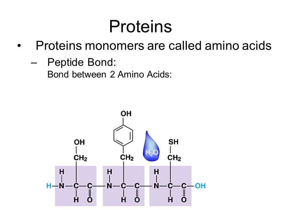 Proteins Proteins monomers are called amino acids