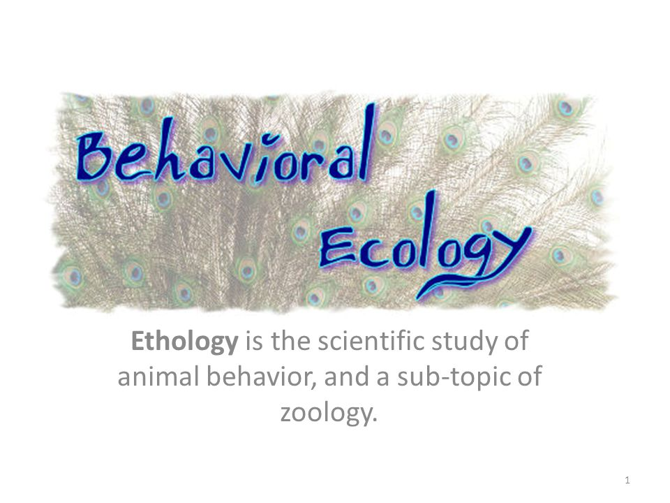 Ethology - Learn.org