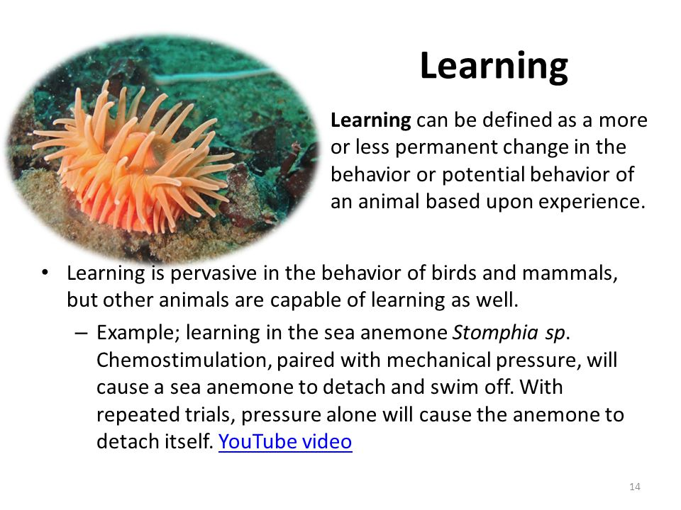Learning Learning can be defined as a more or less permanent change in the behavior or potential behavior of an animal based upon experience.