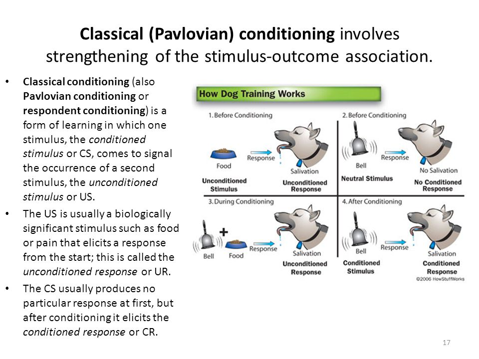 Classical (Pavlovian) conditioning involves strengthening of the stimulus-outcome association.