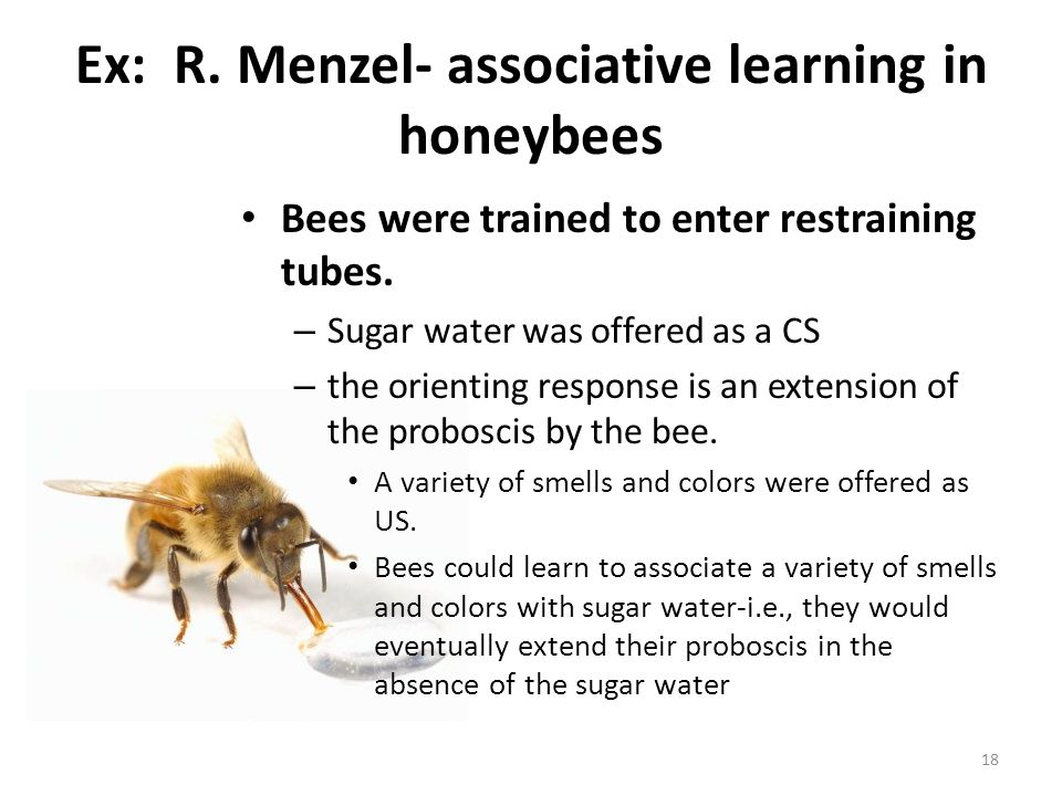 Ex: R. Menzel- associative learning in honeybees