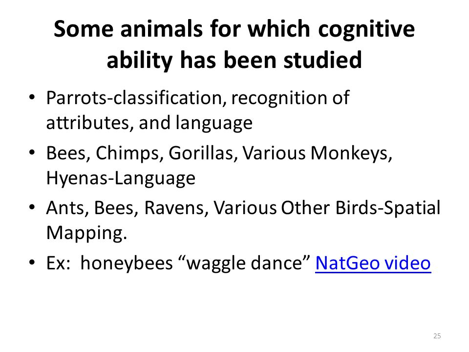 Some animals for which cognitive ability has been studied