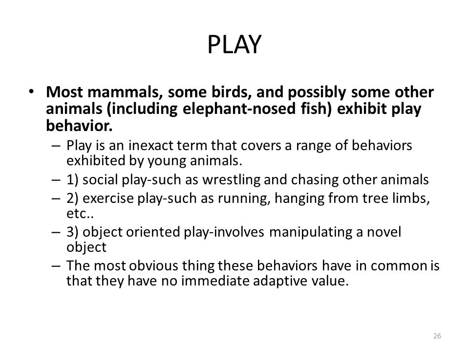 PLAY Most mammals, some birds, and possibly some other animals (including elephant-nosed fish) exhibit play behavior.