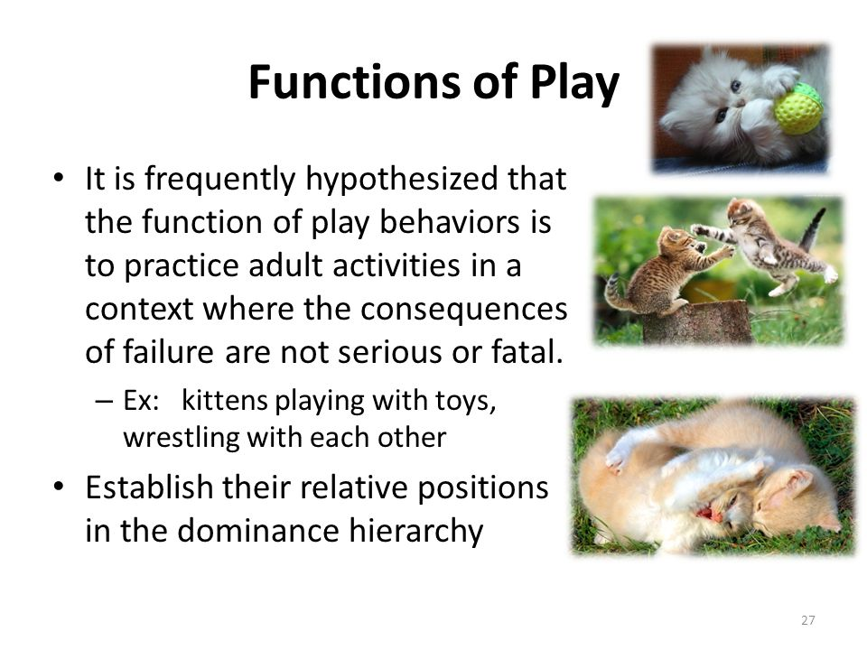 Functions of Play