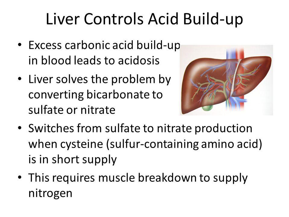 Liver Controls Acid Build-up