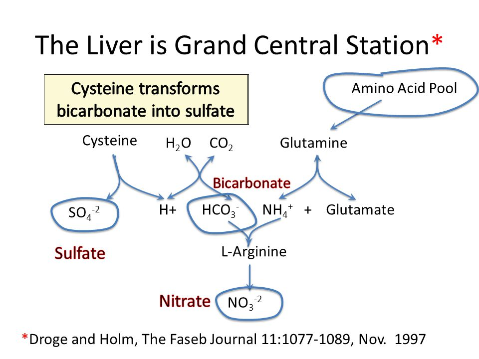 The Liver is Grand Central Station*