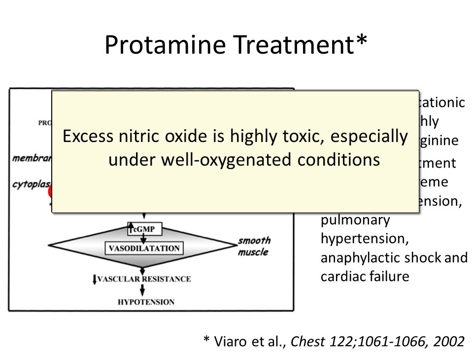Protamine Treatment* Protamine causes eNOS to detach from the membrane and start profusely producing nitric oxide.