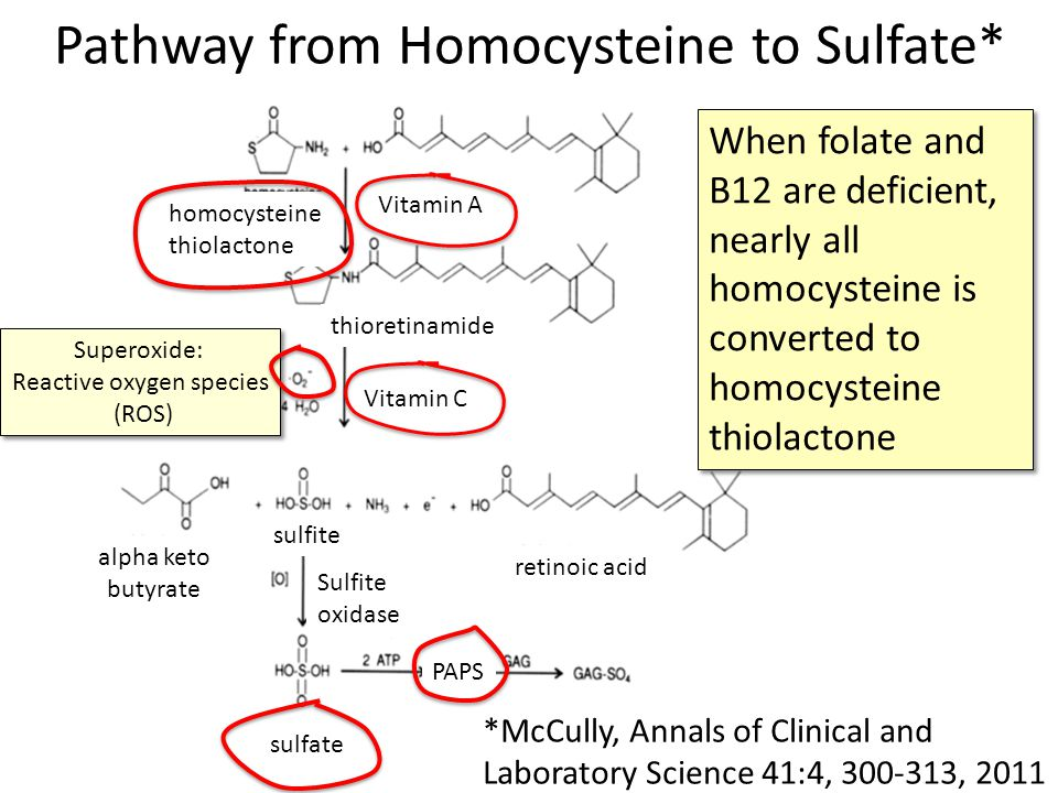 Pathway from Homocysteine to Sulfate*