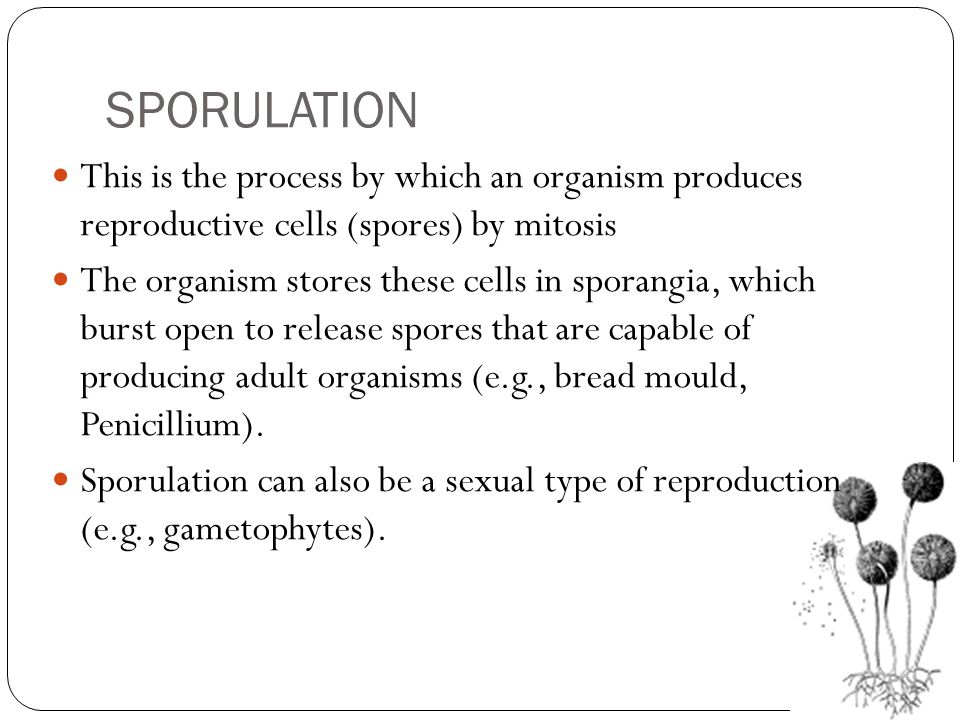 SPORULATION This is the process by which an organism produces reproductive cells (spores) by mitosis.