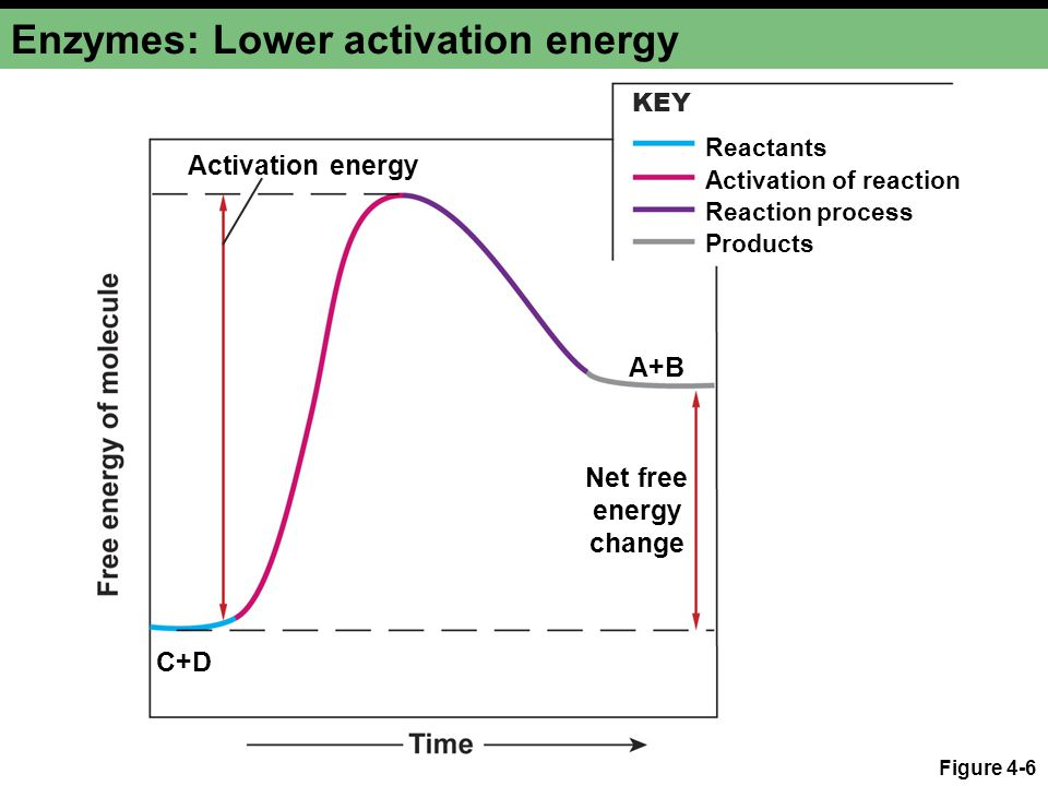 Enzymes: Lower activation energy