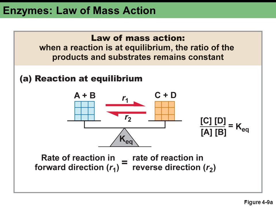 Enzymes: Law of Mass Action