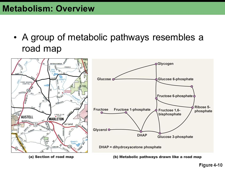 A group of metabolic pathways resembles a road map