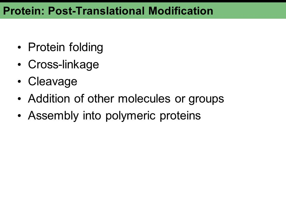 Protein: Post-Translational Modification