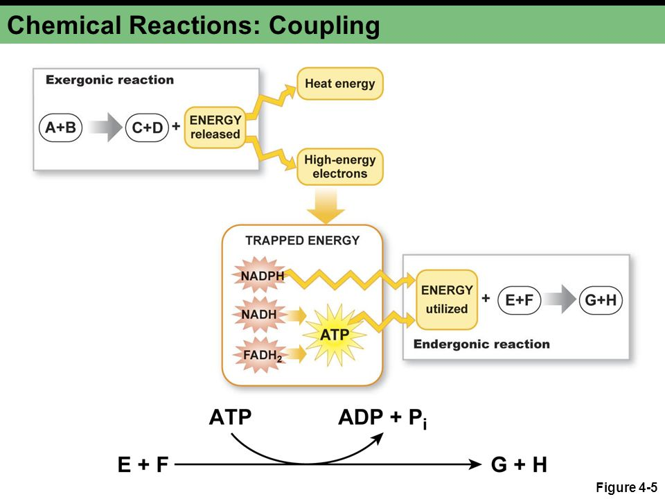 Chemical Reactions: Coupling