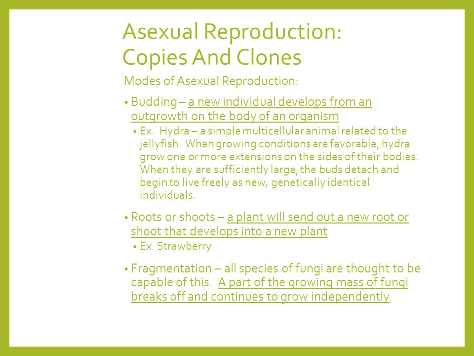 Asexual Reproduction: Copies And Clones