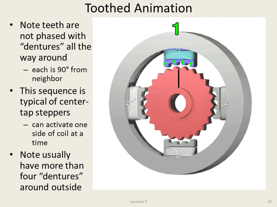 Toothed Animation Note teeth are not phased with dentures all the way around. each is 90° from neighbor.