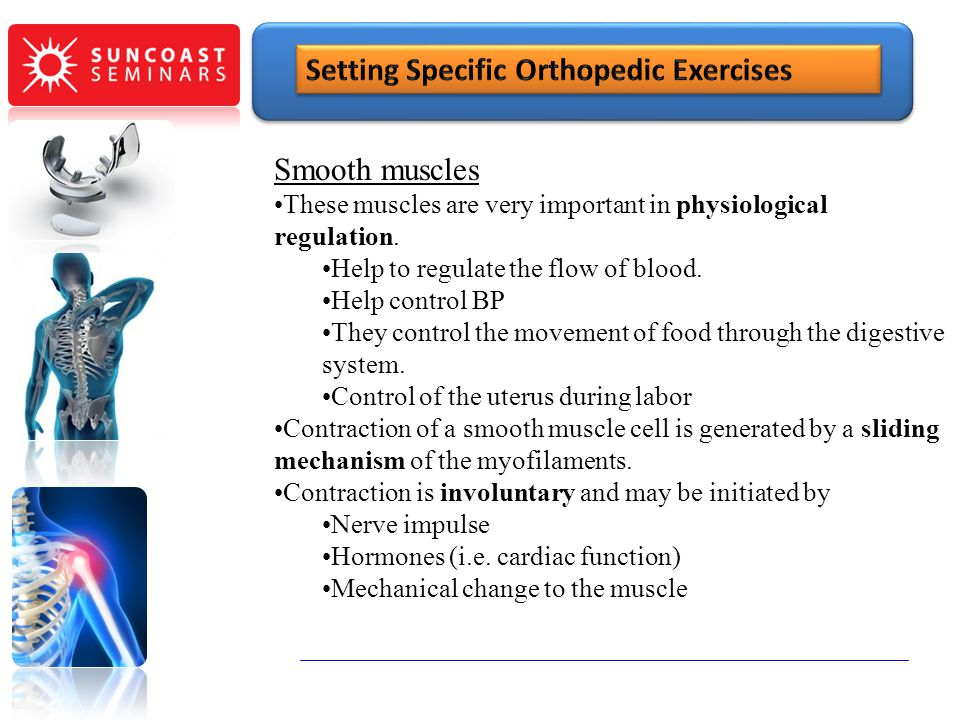 SunCoast Seminars Setting Specific Orthopedic Exercises Smooth muscles