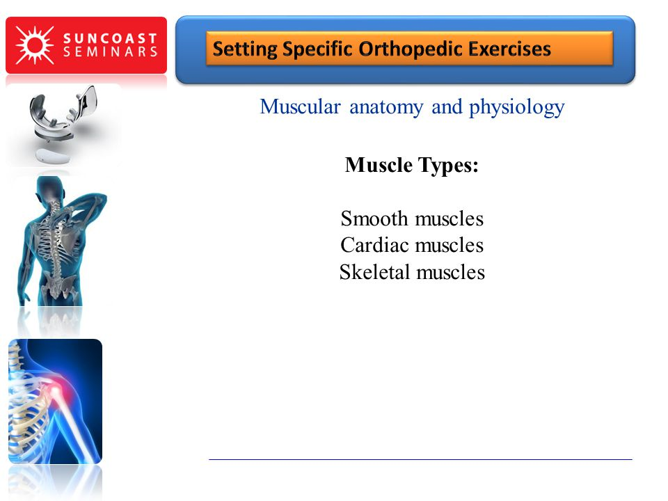 Muscular anatomy and physiology