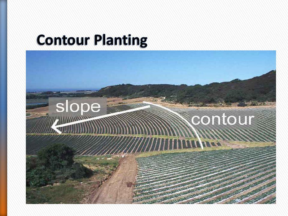 Contour Planting