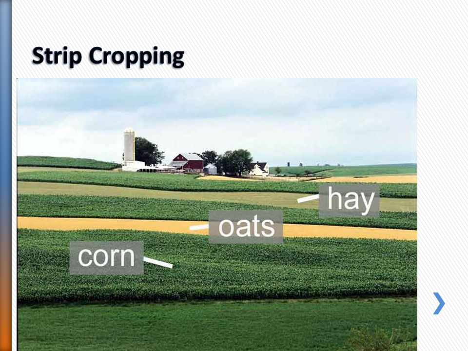 Strip Cropping