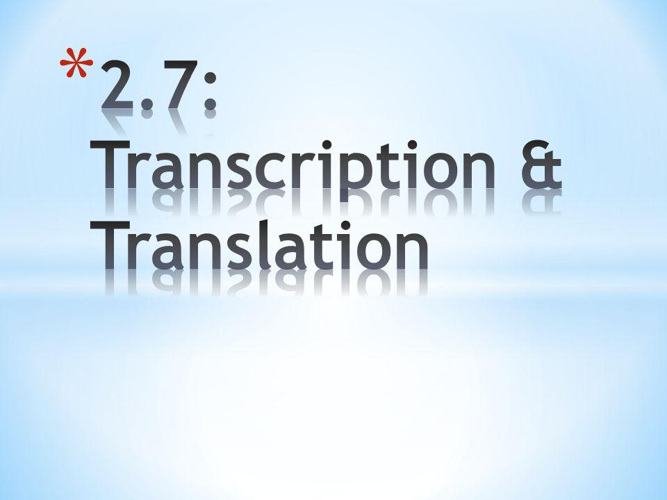 2.7: Transcription & Translation