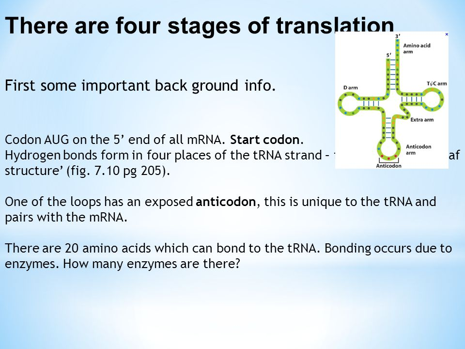 There are four stages of translation