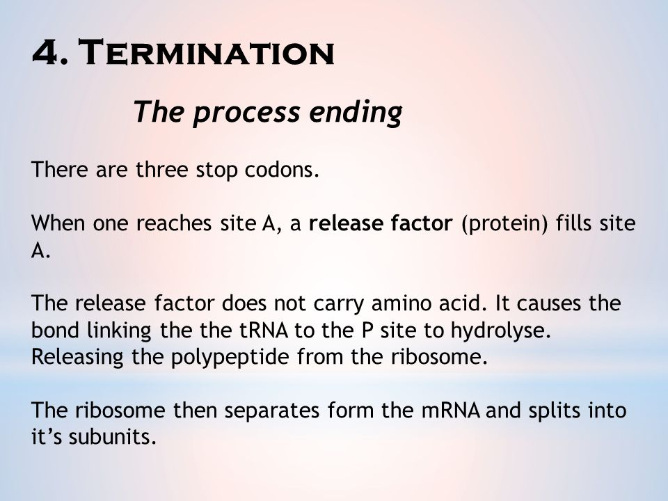 4. Termination There are three stop codons.