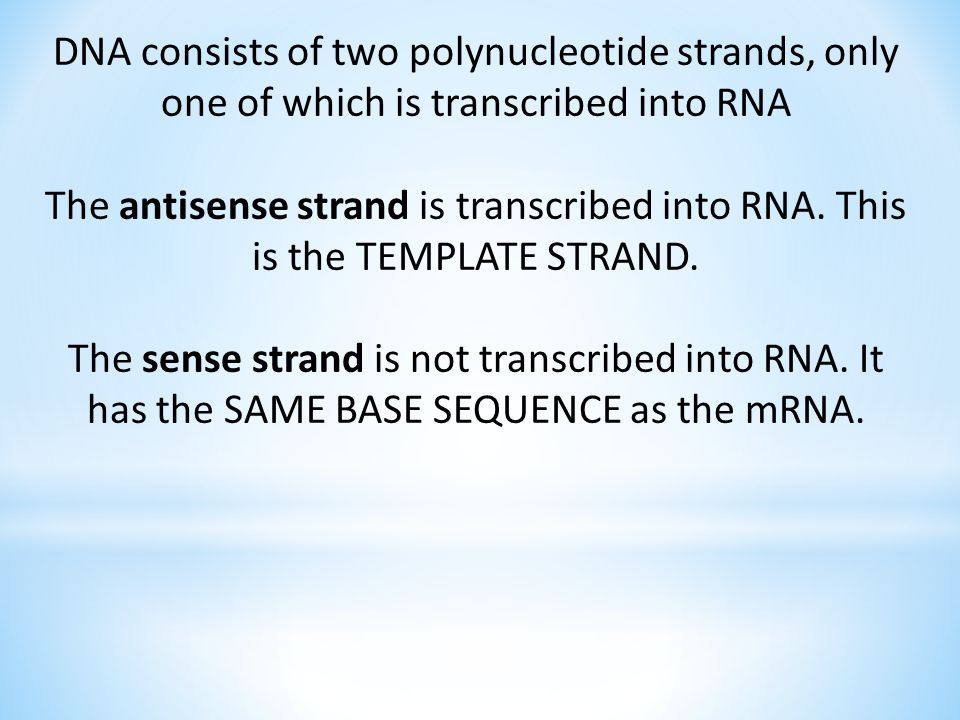 DNA consists of two polynucleotide strands, only one of which is transcribed into RNA