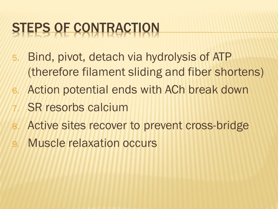 Steps of contraction Bind, pivot, detach via hydrolysis of ATP (therefore filament sliding and fiber shortens)