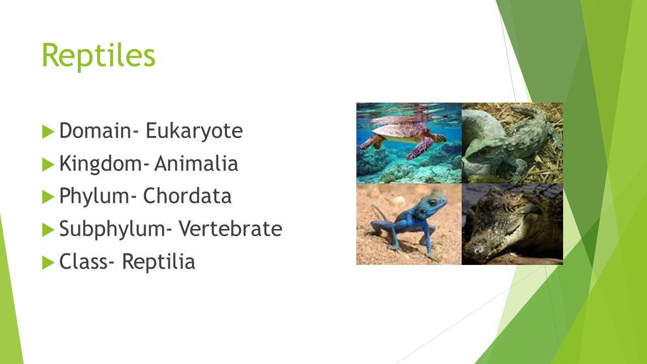 Reptiles Domain- Eukaryote Kingdom- Animalia Phylum- Chordata