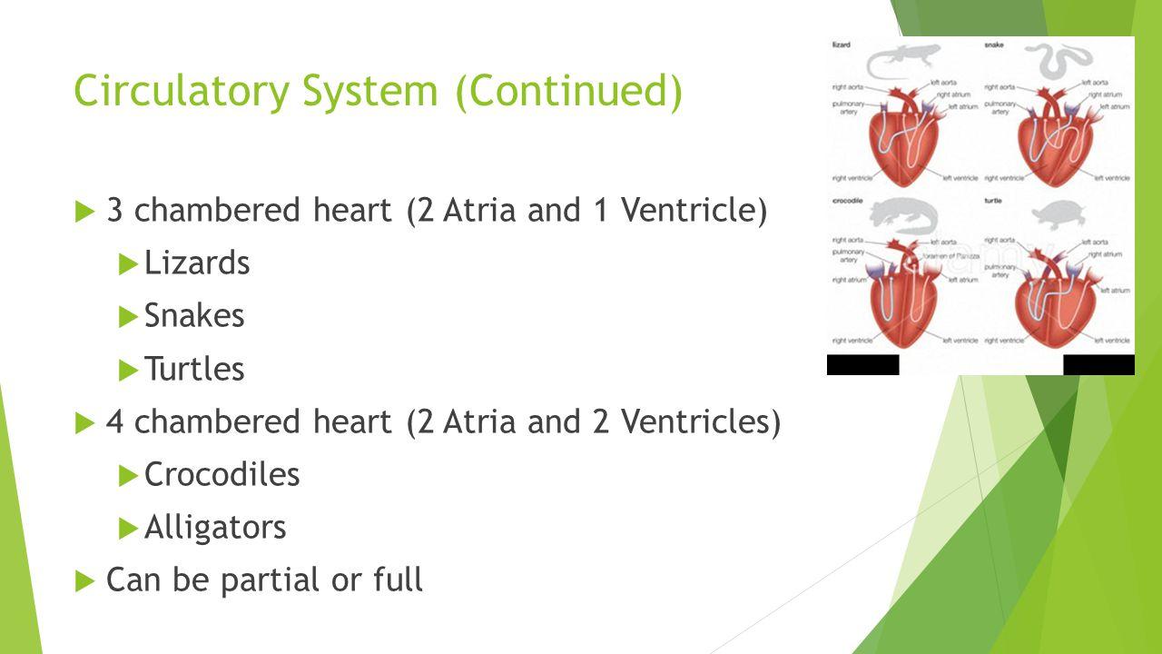 Circulatory System (Continued)