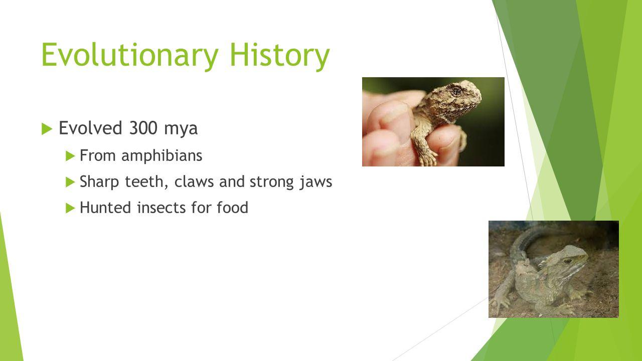 Evolutionary History Evolved 300 mya From amphibians